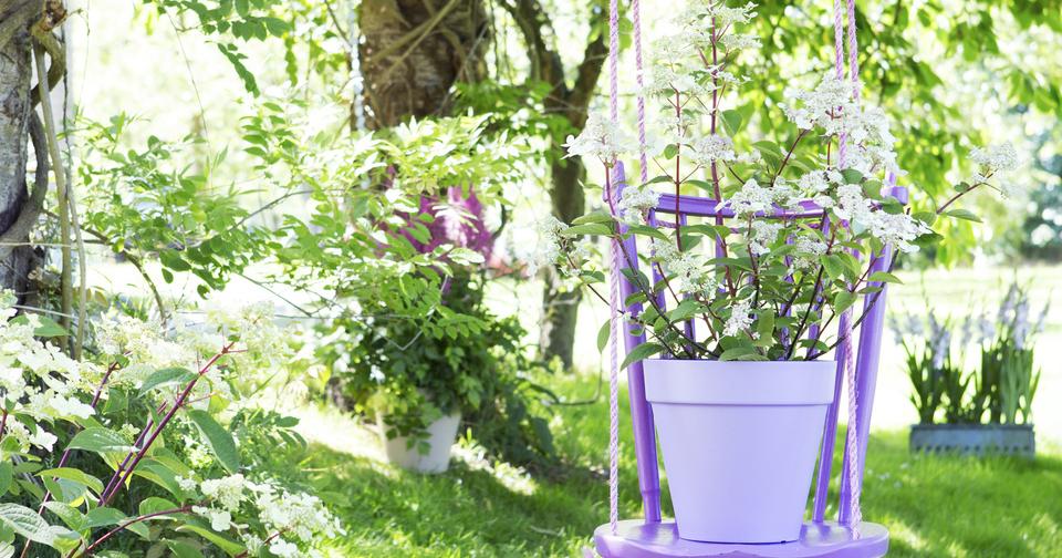 Tuinplant Van De Maand Juli De Pluimhortensia Praxis Blog