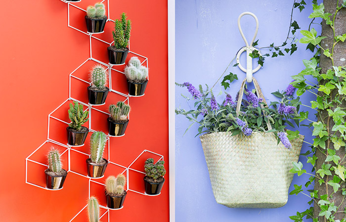 Tuinplant Woonplant Augustus Praxis Blog