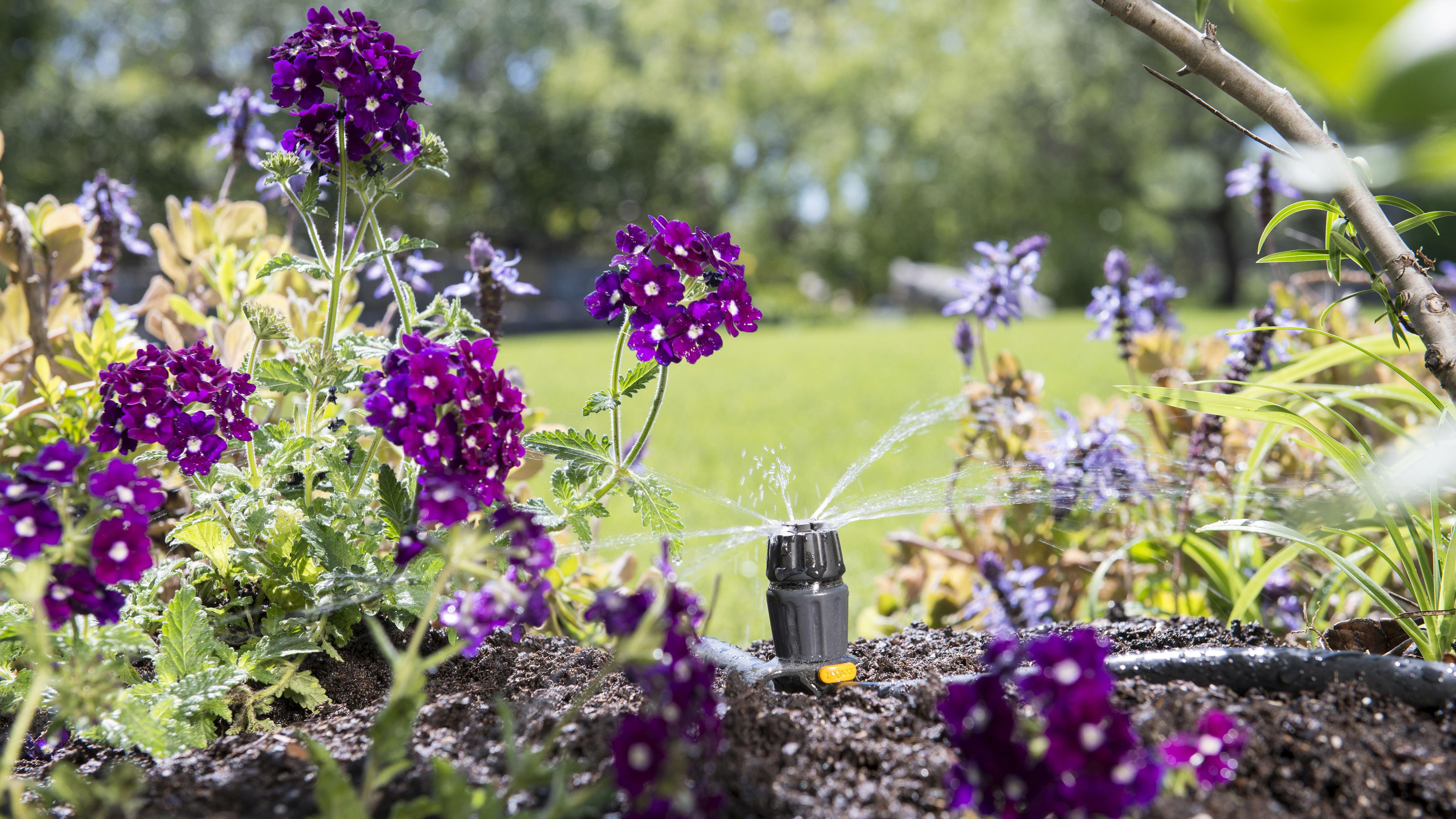 Welp Planten water geven: hier moet je op letten | Praxis Blog BO-83