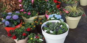Kapstok, plantjesmarkt en je eigen brickwall | Eigen Huis en Tuin