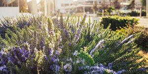 Een groene wintertuin met deze 5 planten