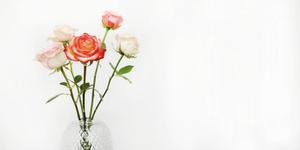 Tuinplant van de maand juni: de roos