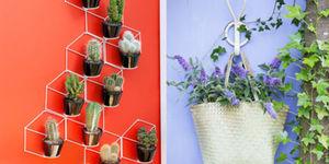 Tuinplant & woonplant augustus