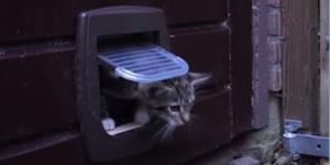 Kattenluik maken