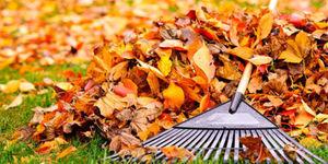 Tuinkalender oktober