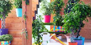 Tuinplant & woonplant januari
