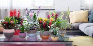 Tuinplant & woonplant maart