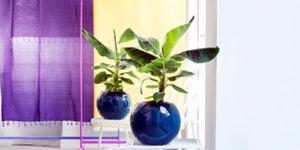 Tuinplant & woonplant april