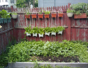Tuinieren met hooikoorts