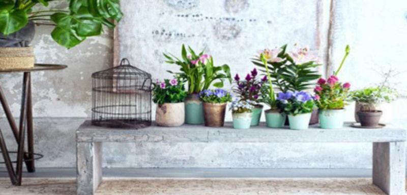 Tuinplant & woonplant mei