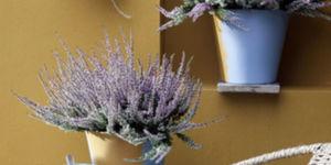 Tuinplant & woonplant september