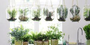 De tuin- en woonplant van oktober