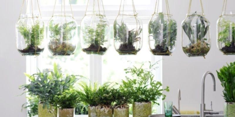 De tuin en woonplant van oktober praxis for Tuin praxis
