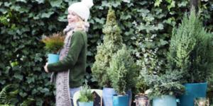 Vrolijk je tuin op met winterplanten