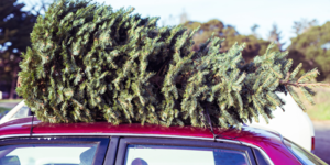 Zo vergaat je kerstboom niet vóór het kerst is