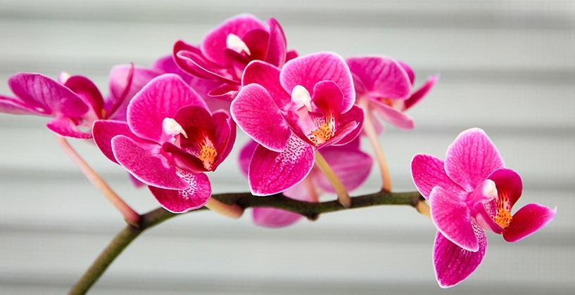 hoe verzorg ik een orchidee