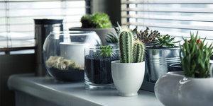 Hoe verzorg ik een vetplant en cactus?
