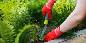 De tips en tricks voor het verwijderen van onkruid