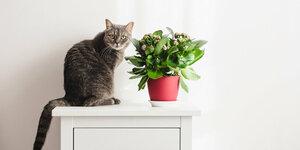 Welke planten zijn giftig voor katten en honden?
