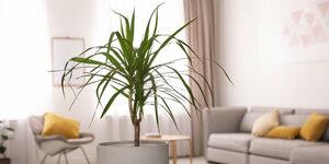 6 x luchtzuiverende kamerplanten