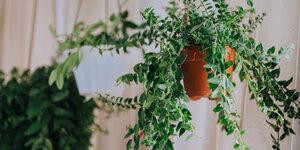 De mooiste hangplanten voor binnen en buiten