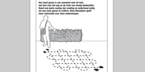 Kluswijzer gazon, tips voor aanleg, voeding en onderhoud