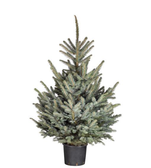 Fabulous Kerstboom kopen? Bekijk het assortiment kunst en -kerstbomen | Praxis WQ69